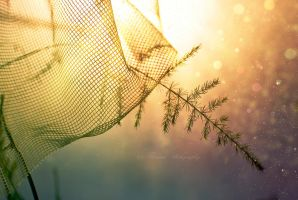 A whisper of sunlight by Floreina-Photography