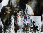 Flower of the Night chapter image by bottle-of-dreams