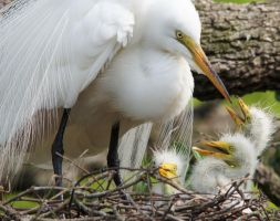 Egret Nest by Fail-Avenger