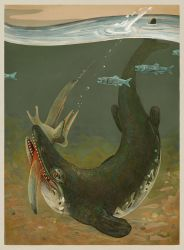 Tylosaurus pembinensis by greer-stothers