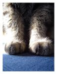 A Pair of Paws by Neho