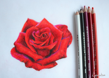 Rose by Lauralina