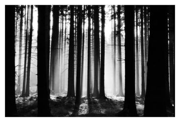 Sumova Mountains Forest III by wolvien