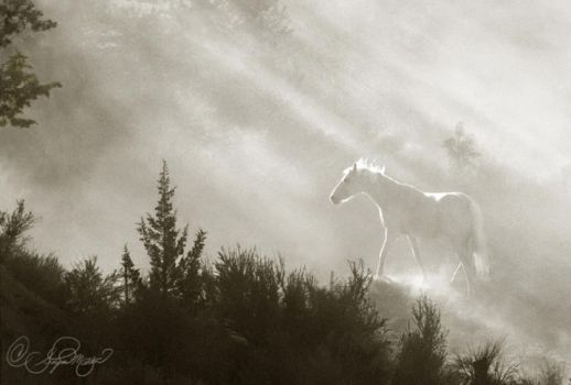Cameo morning light by photocrafter