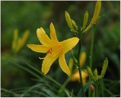 Yellow and Green by Nambroth