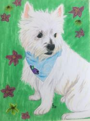 Annabelle the Westie by roxasroxs