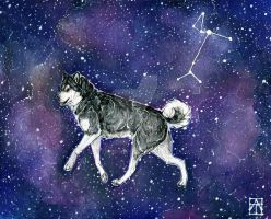 Alpha Canis Major (Hopefully This One Works?) by Rhythmpaws
