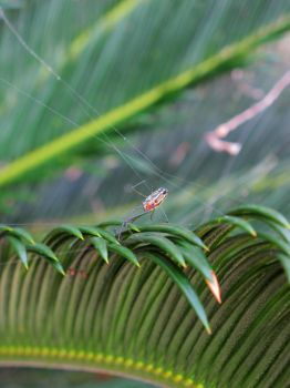 Spider at the Palm by WaSSa