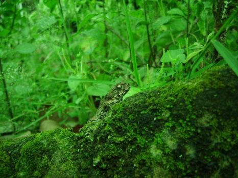 Toad by mondinger
