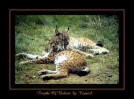 Couple Of Bobcat by caracal
