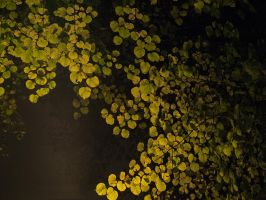 Leaves at night 3 by Inilein