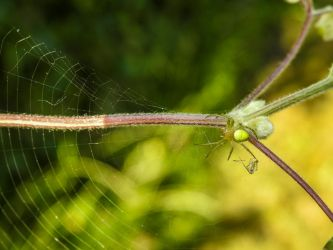 Green Spider by Bunny-with-Camera