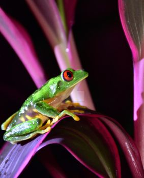 Frog in the night by Guadisaves02