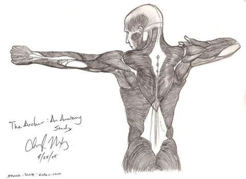Study Of Anatomy The Archer By Herahkti On Deviantart
