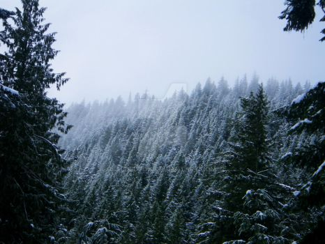 Snow Forest by Aldedron