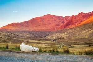 Sheeps and way to the Ferry Pools by Lain-AwakeAtNight