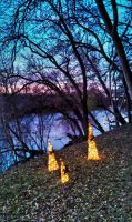 Lighted trees by herbalcell