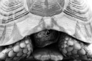 turtle by bitax