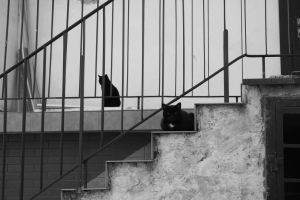 2 cats by senner