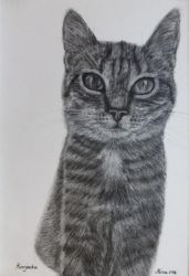Tabby charcoal drawing by Actlikenaturedoes