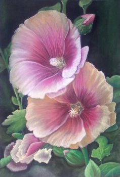 Hibiscus by rougealizarine