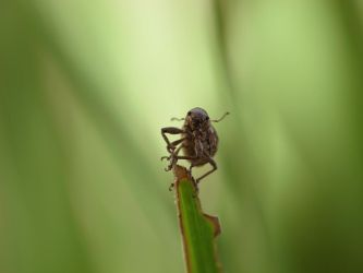 Weevil by suhleap