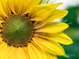 Yellow-ab-363695 by MSchmidtProductions