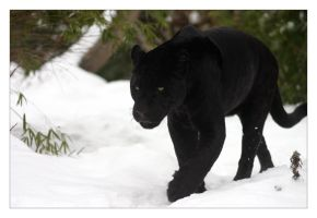 Zoo Animals in the Snow_Jaguar by marble911