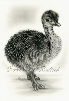 ostrich chick 2 by Isisnofret