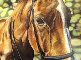 Horse Portrait with background by bunnyrabb567