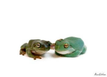 froggy love by Ravinss