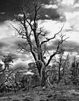 Dead Tree by Noko-Photography