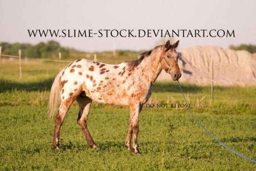 TB x Appy standing lead line by slime-stock