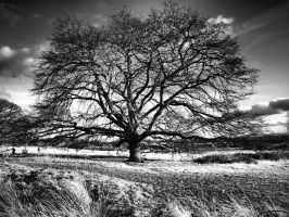 Old Tree Wimpole Hall Estate by davepphotographer