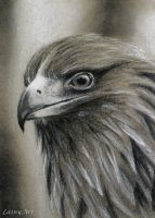 Day 118 - ACEO Drawing Project by secrets-of-the-pen