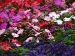 Mixed flowers by UdoChristmann