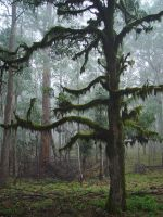 Forest Moss by CountrySquireNSW