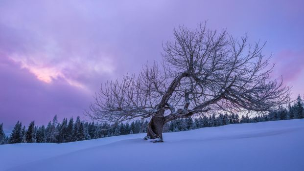 Vibrant tree on a snowy alpine morning by StefanPrech