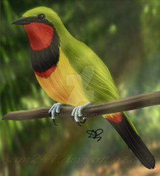 Gorgeous Bush Shrike by sam241