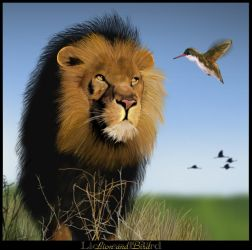 Lion and Bird by zoanoid