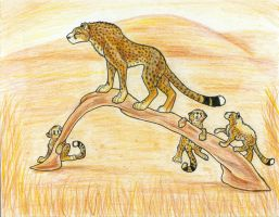 Cheetah Watch by WhiskerWing