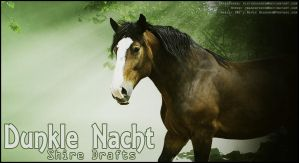 Dunkle Nacht Shires by Beetlebug16