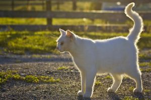 White Cat by DWDStock