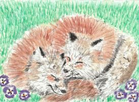 Snuggled up fox  friends watercolor aceo by tulipteardrops