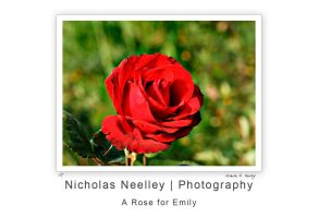 A Rose for Emily by PurpleBlades