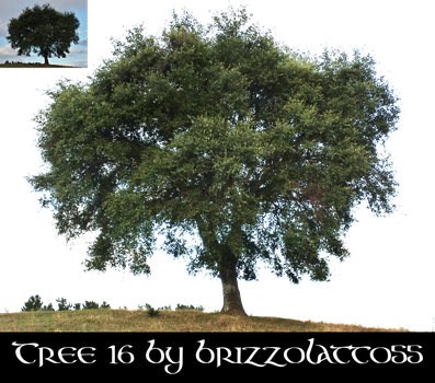 Tree 16 by Brizzolatto55