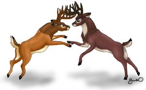 Bambi x Ronno: Rematch by Gazzelles