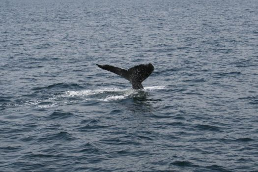 Whale of a Tail by ADreamDazer
