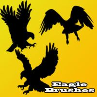 Eagle Brushes by remygraphics