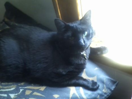 Our Cat Midnight (01) by LongFamilyPets